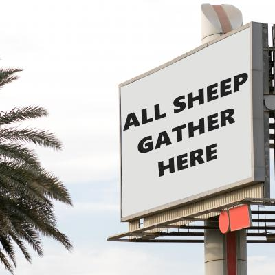 "sign reading ""all sheep gather here"""